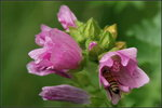 Blommor & Bin igen