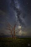 Det döda trädet