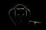 Panther ver.2