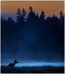 Juninatt på hjortens myr
