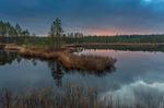 November vid skogssjön