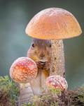 mushroom whisper