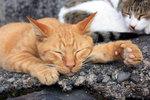 Trött kisse