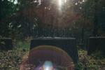 Vrinneviskogen / Helios 44-2 58mm f/2