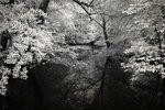 Lövskog vid vatten.