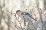 Vinterfågel