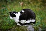 Grannens katt