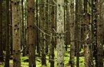 Skogsmönster