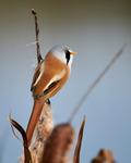Höstfågel