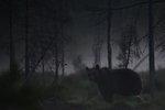 Natt i Björnriket