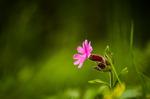 Blomma eller ogräs?