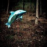 Skogsdelfin