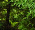 Skogen I Fokus
