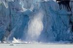 Glaciär kalvar