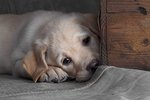 Dolly vid lådan