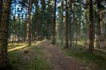 En kvist i skogen