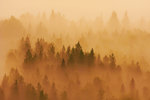 Skogen vaknar 2