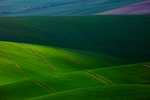 Moravia Czech
