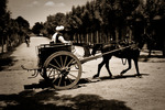 Hästdroska i Herat