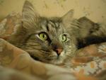 Katten Yamiee