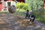 Med hund och boll