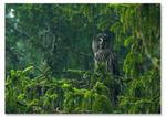 Skogens väsen