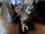Myror är tålamods krävande....
