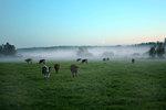 Kossig dimma