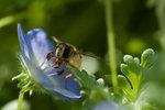 Slicka nektar