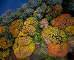 Korallrev?