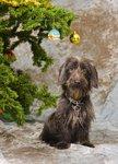 Uffe som Jul hund