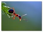 Myra i motljus