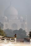Monkey and Taj Mahal.