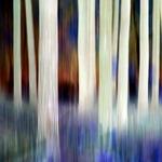 Skogsdrag