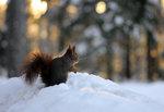 """December 2012 min mysiga """"vän""""!"""