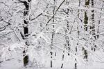 Det har snöat!