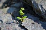 Växtkraft