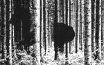 Skogshæst