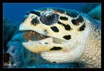 Sköldpaddsfrukost