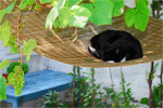 Retzina´s hammock