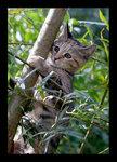 Trädklättraren