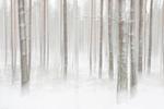 ICM i vinterskogen