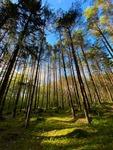 iPhone i skogen