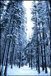 En kall dag i skogen