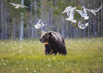 Möte i naturen