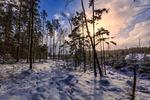 Sunny Deforestation Border