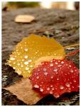 Några löv