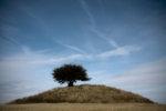 Kullens träd