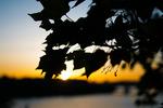 Solnedgång över stora Essingen