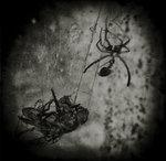 flugan och spindeln